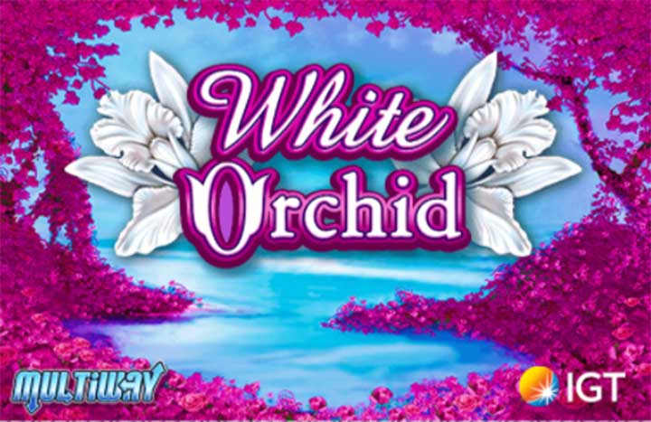 How To Betting White Orchid Slot At Pussy888 Online Casino